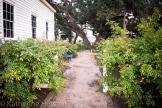 garden off chapel
