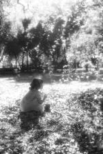 Pecan picking